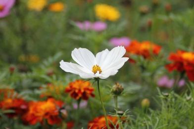 apaisement fleur