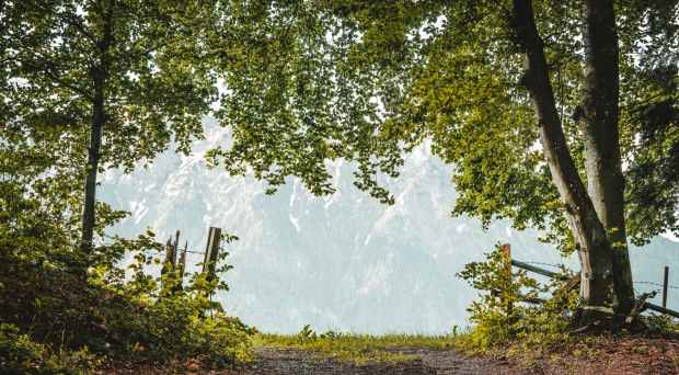 dirt pathway beside trees